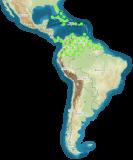 mapa rozšíření Blaberus discoidalis