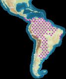 mapa rozšíření Blaptica dubia