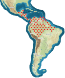 mapa rozšíření Blaberus giganteus